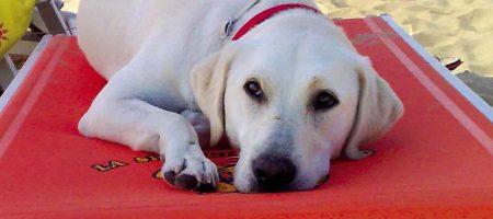 Dog's life in Bibione