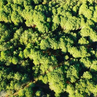 What do you think it is? Broccoli 🥦 or trees 🌳?😂 Our place to breathe 🧘  📸 @edocodognotto @icio82_   #discoverbibione #differentepernatura #bibione #nature #landscape #landscapephotography #drone #dronephotography #fromthetop #pinegreen #pinewood #breathe #recharge #rechargeyoursoul
